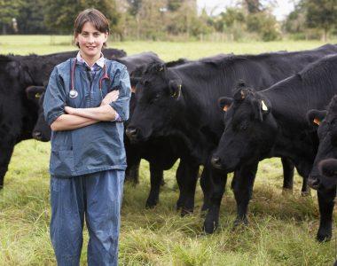 Dierenarts runderen