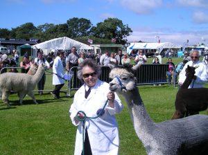 Llama show