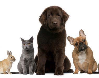 Welke dieren fok je?