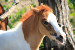 Pony's fokken