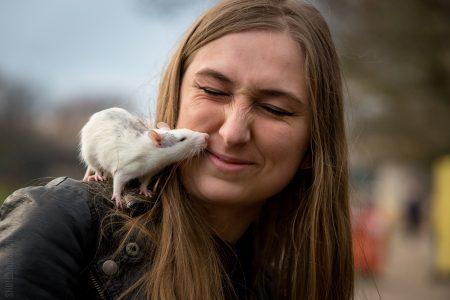 Ratten fokken