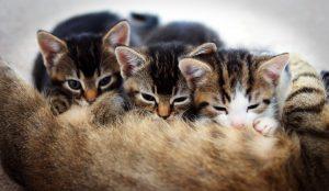 Registreer jonge dieren en nesten