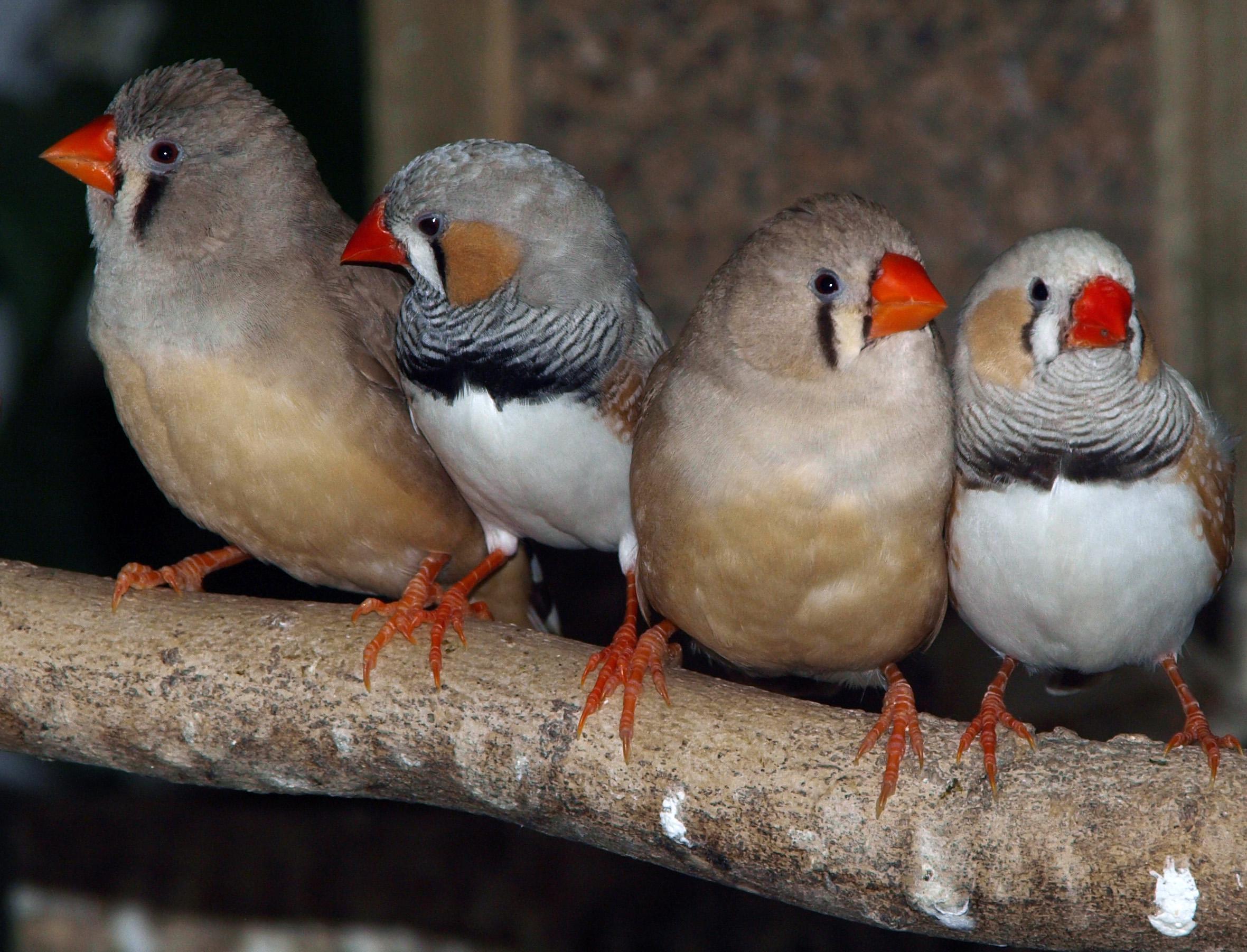 Vogels kweken