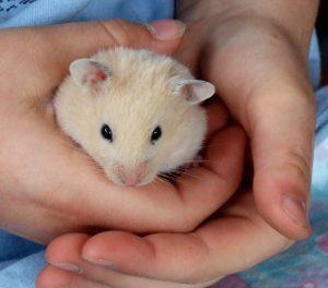 Hamster 5