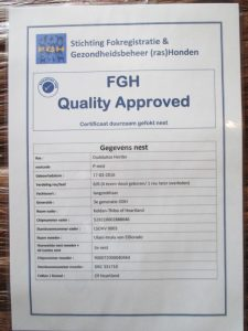 Quality Approved dogs FGH