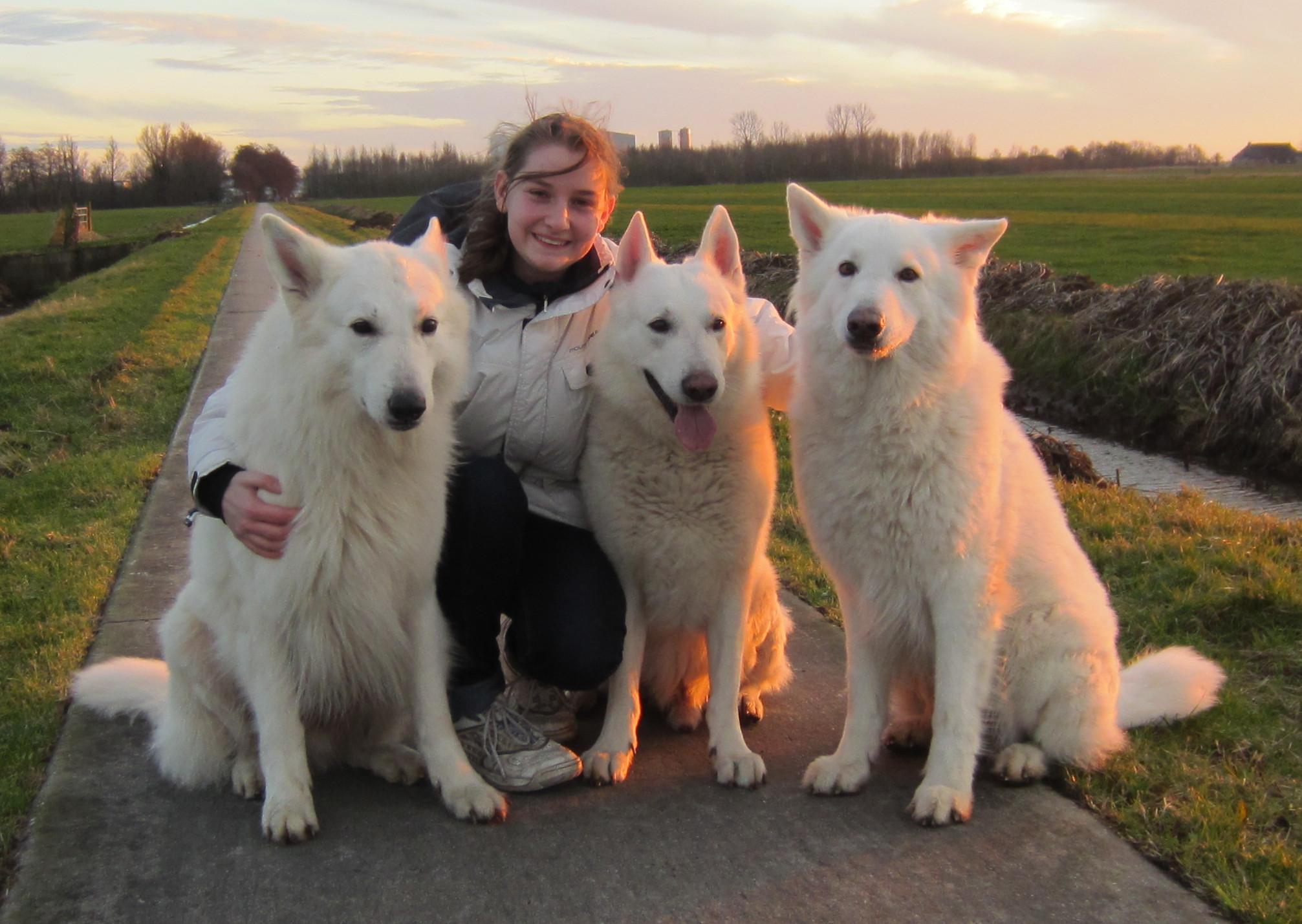 Rasclub voor Zwitserse Witte Herders bouwt aan online database