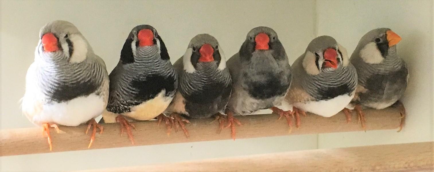 """""""Als serieuze vogelkweker kan je niet zonder ZooEasy"""""""