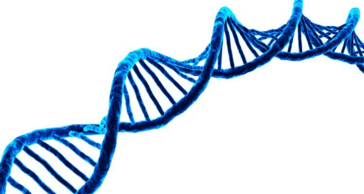 Gebruik van DNA-informatie binnen de fokkerij
